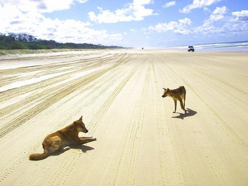 世界最大の砂の島・世界遺産フレーザー島