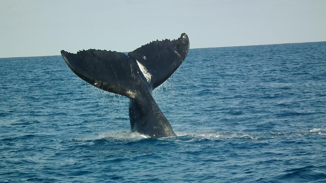クジラを見るツアー