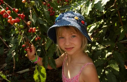コナ・コーヒー農園
