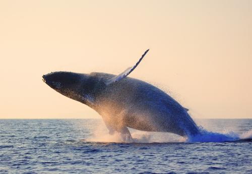イルカ・クジラ