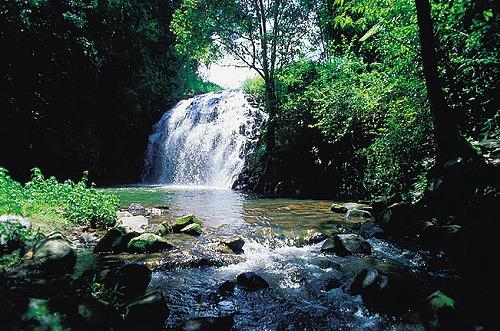 熱帯雨林ツアー