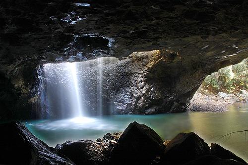 世界遺産の森で見る神秘の土ボタル
