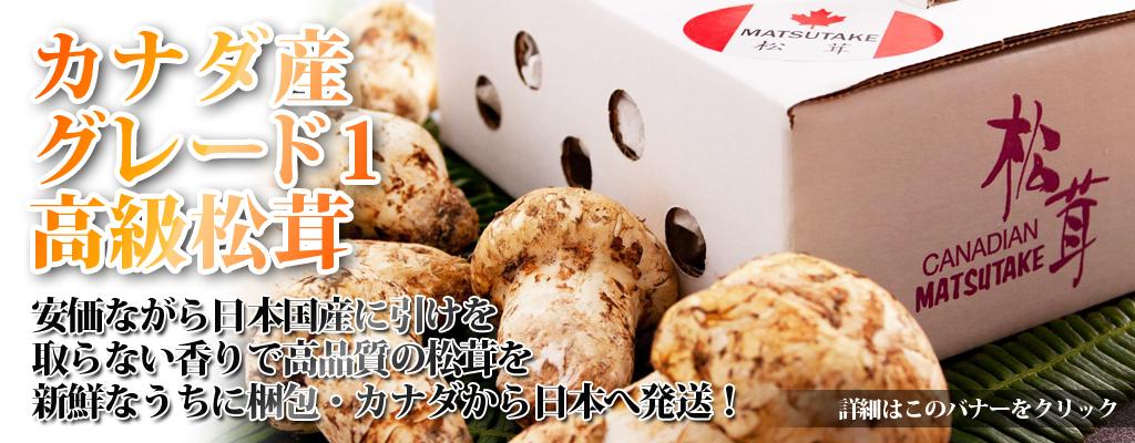 カナダ産の松茸を日本のご家族へ!