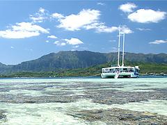 【幻の島】サンドバー上陸&珊瑚礁シュノーケル (カイルア・タウン散策付き/なし)