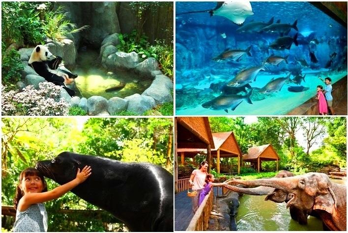 【シンガポール】動物園+リバーサファリ入場券付き