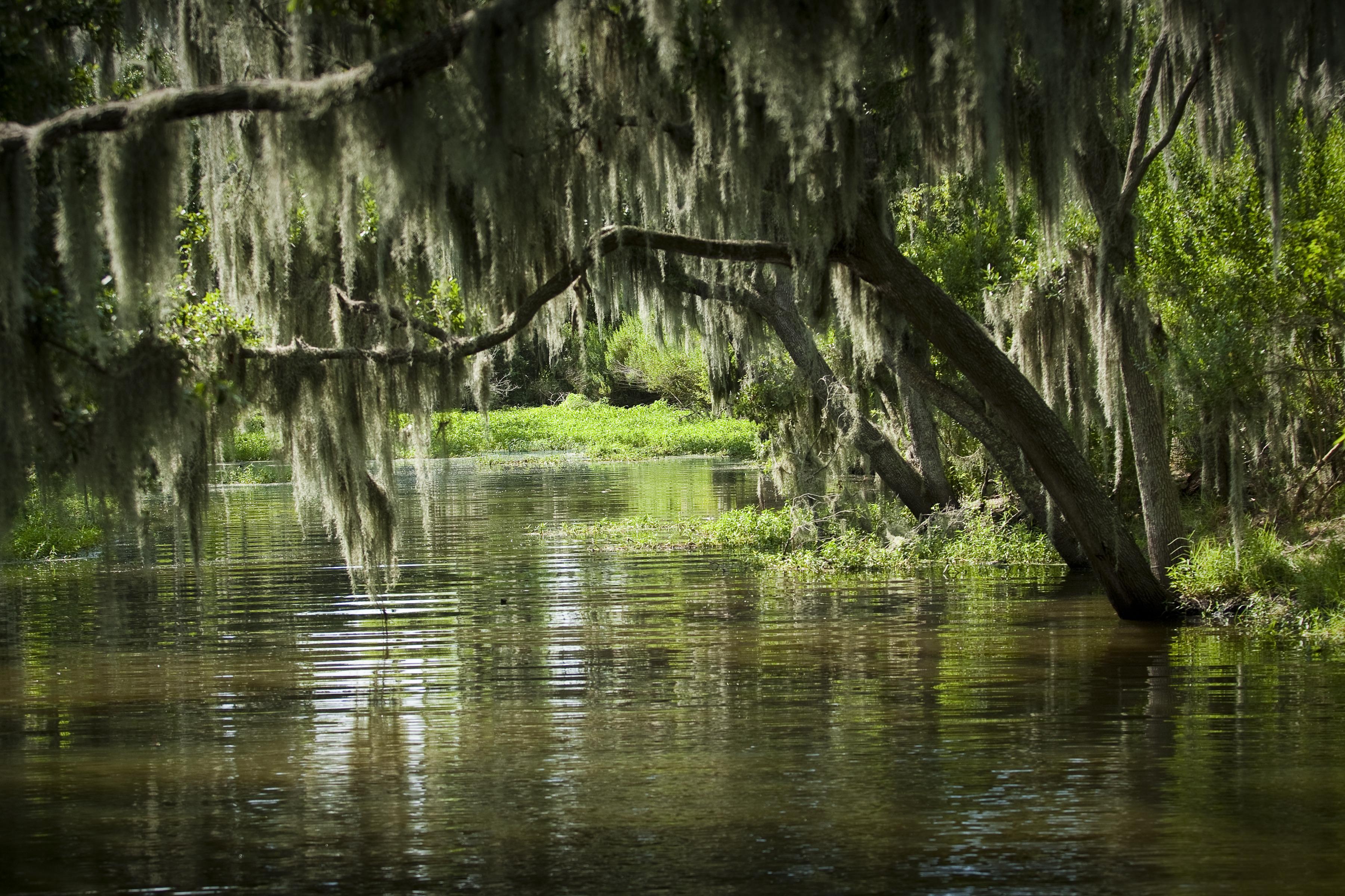 スワンプ&バイユー湿地帯探検 ツアー