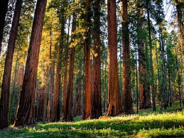 ロサンゼルス発 セコイヤ国立公園 日帰りツアー