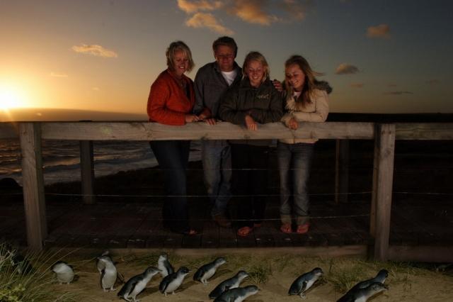 午後出発!フィリップ島のペンギンパレード
