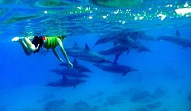 【野生のイルカと泳ぐ♪】コオリナ・イルカ・パワーボート・ツアー