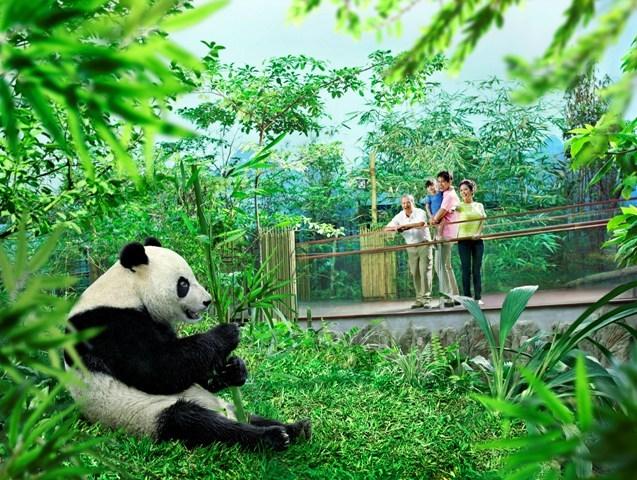 【シンガポール】パンダに会いに行こう! リバーサファリ