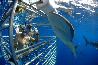 【野生のサメ】ハワイ・シャーク・エンカウンターズ (ケージ内ウォッチング/船上ウォッチング)