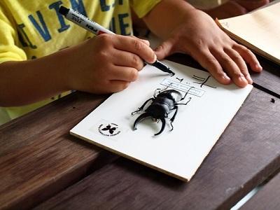 オリジナル標本作りと昆虫観察