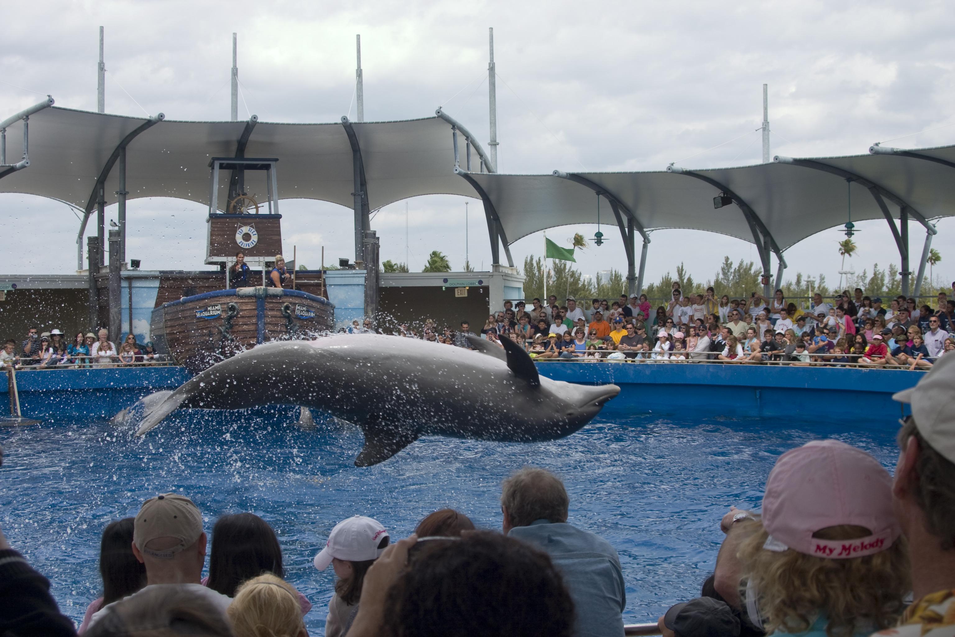 シャチとマナティに出会えるマイアミ・シークエリアム(水族館)とマイアミいいとこどり!ハイライト観光