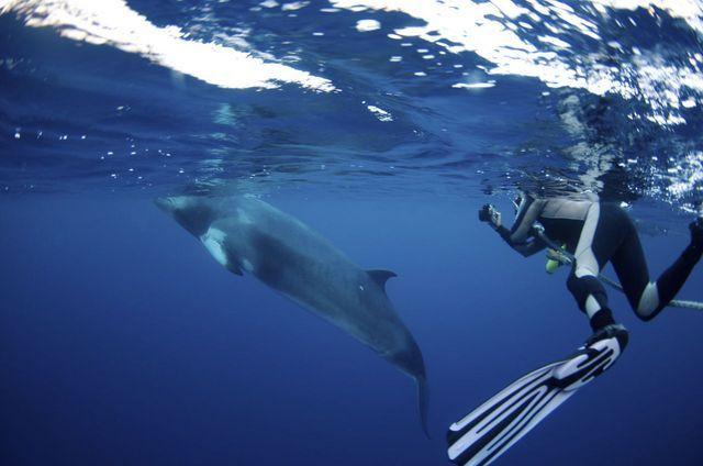 【6・7月期間限定】ミンククジラシュノーケル&ダイビングトリップ4日間ダイビング最大16本