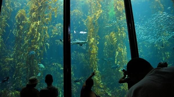 モントレー・カーメル & モントレー水族館 1日観光 英語ツアー