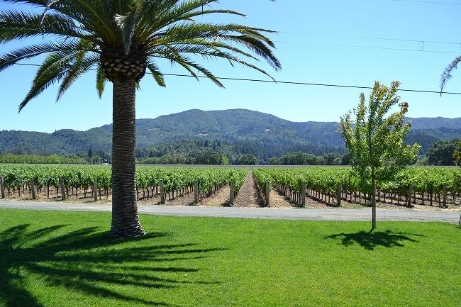 レッドウッドの森とワインカントリー エスケープツアー グルメランチ&ワインペアリング付き
