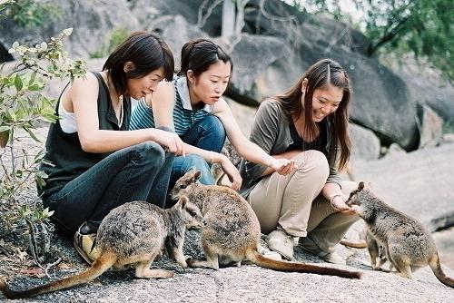 どきどき動物探検ツアーとキュランダ観光<キュランダ高原鉄道利用>