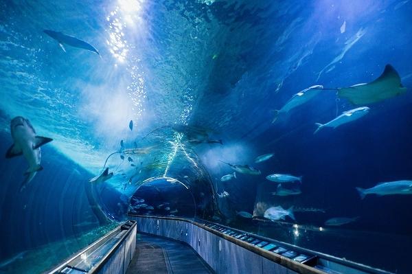サンフランシスコベイ水族館 入場券