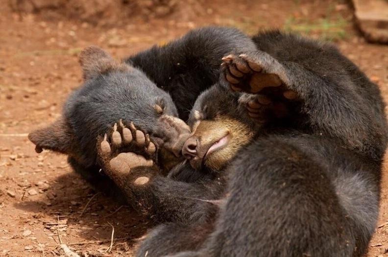 べアリゾナ野生動物公園 チケット手配