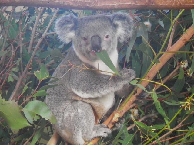 ブルーマウンテンズとオーストラリアの自然探訪