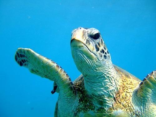 ハナウマ湾体験ダイビング・ツアー(10名限定)