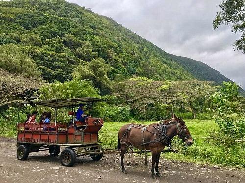 日本語ガイドと行く!ワイピオ渓谷ツアー (ミュール・ワゴン・ツアー)
