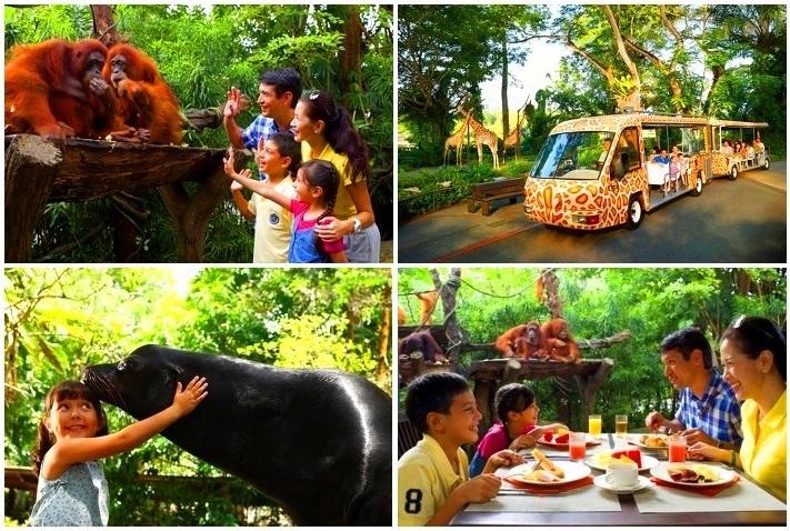 【シンガポール】空港送迎付 動物園(オランウータンと朝食付)