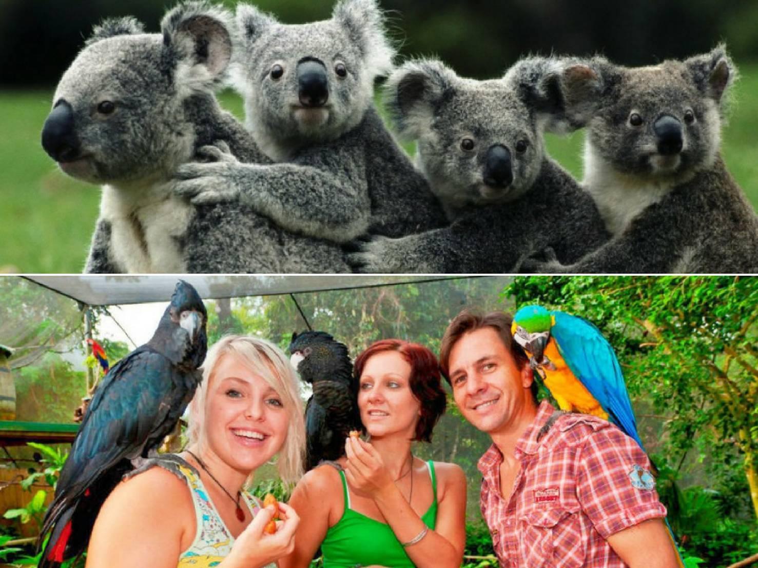 コアラガーデン動物園&バードワールド野鳥園2パークパス