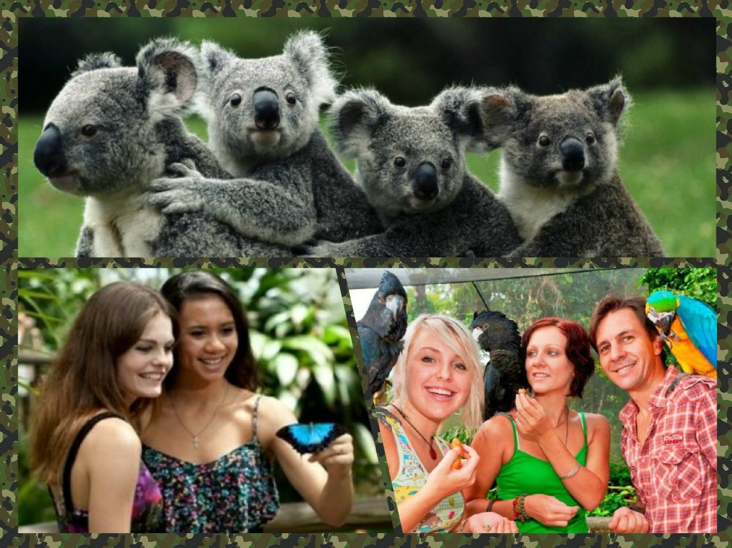 コアラガーデン動物園&バードワールド野鳥園&バタフライサンクチュアリ蝶園3パークパス