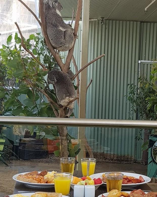 ワイルドライフ・シドニー動物園にてコアラ朝食!