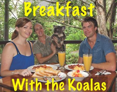 ハートリース動物園 コアラと一緒に朝食