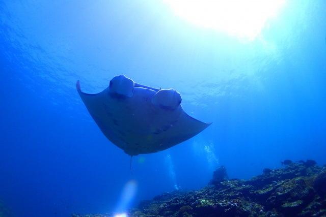 LOAレンボンガン島 [透明度抜群!!! マンタと泳ごう!!!ヌサペニダ島&レンボンガン島でシュノーケルとマングローブの林探検ツアー]