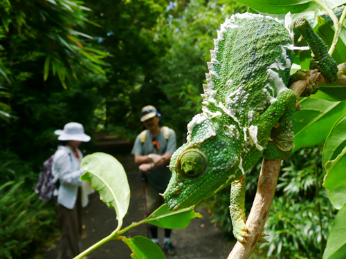 ジャングル・ハイキングツアー