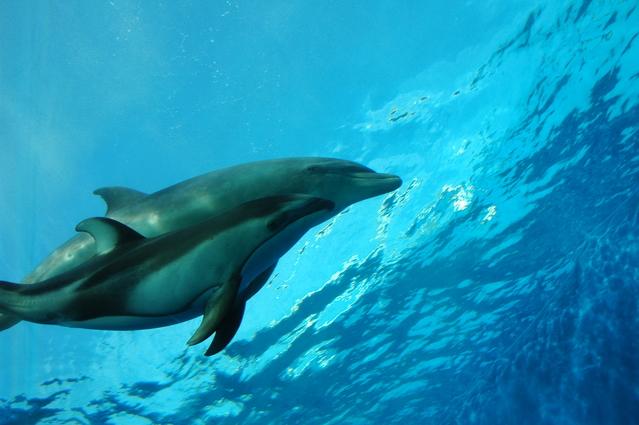 【野生のイルカと泳ぐ♪】ドルフィン&ユー