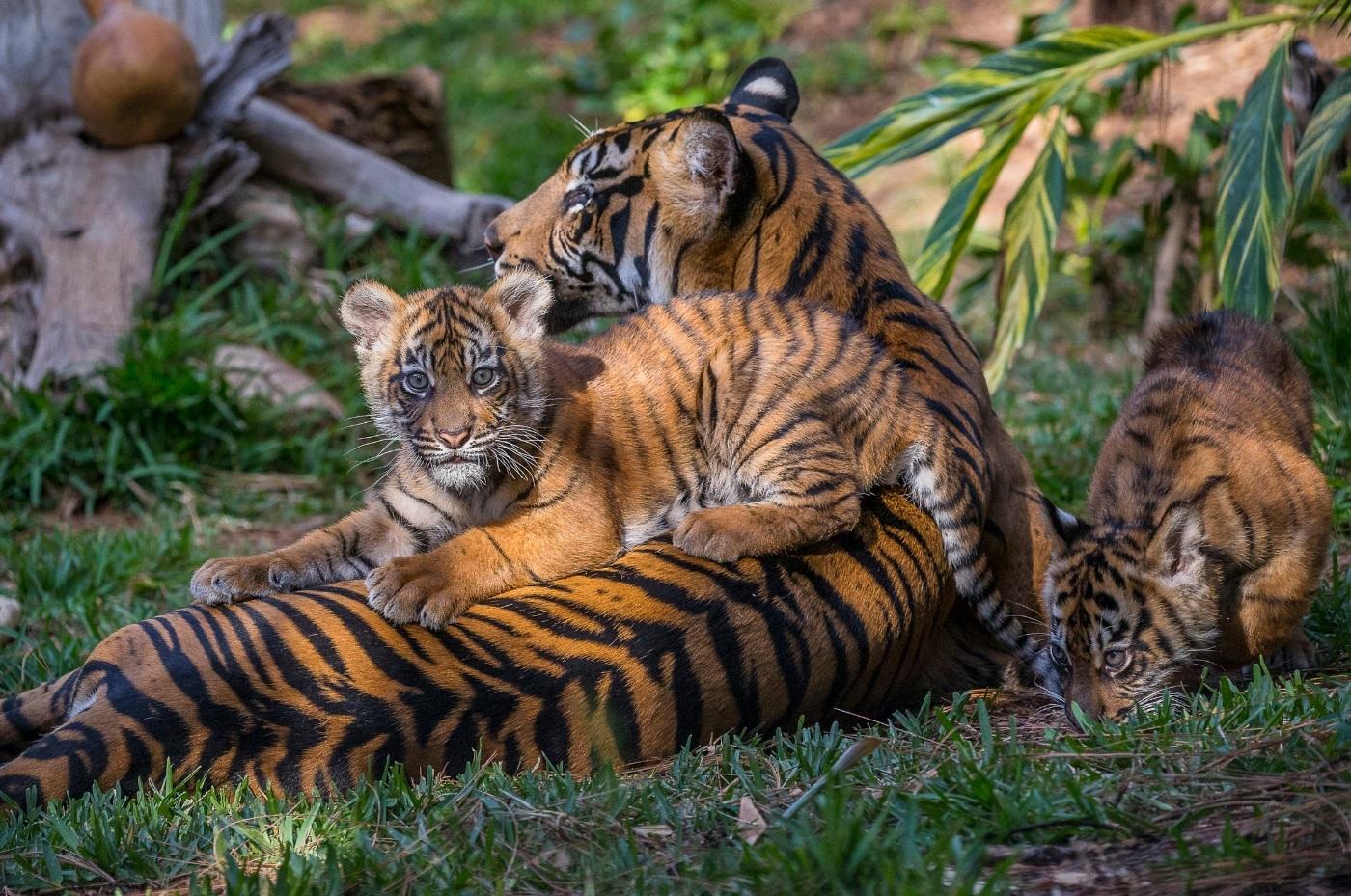 サンディエゴ動物園観光