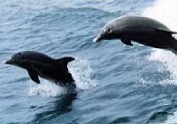 メキシコ湾イルカ・ウォッチング
