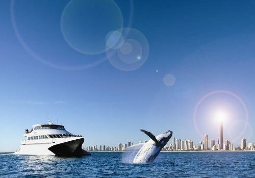 【期間限定】 安心の日本語ガイド付き・クジラウォッチングクルーズ