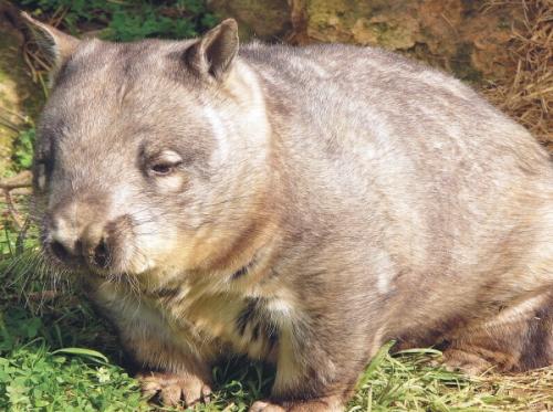 ワイルドライフ・シドニー動物園