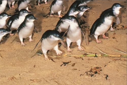 ペンギンパレード&ワイルドライフパークツアー