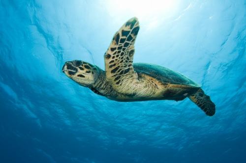 【初心者OK!】「ハナウマ湾」で開催♪ 体験スキューバ・ダイビング