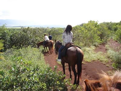 ノースショア観光&乗馬ツアー(ワイメア渓谷コース90分)