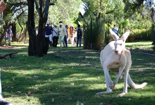 オージーアニマルとワイナリー・ツアー(動物園&チョコファクトリー&ワイナリー訪問)