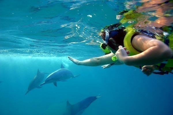 【野生のイルカと泳ぐ♪】シーハワイ・エコ・ドルフィン・シュノーケル・ツアー