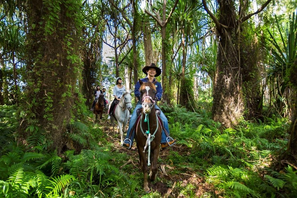 ブレイジングサドルズ 1日乗馬ツアー 4歳から参加可能!