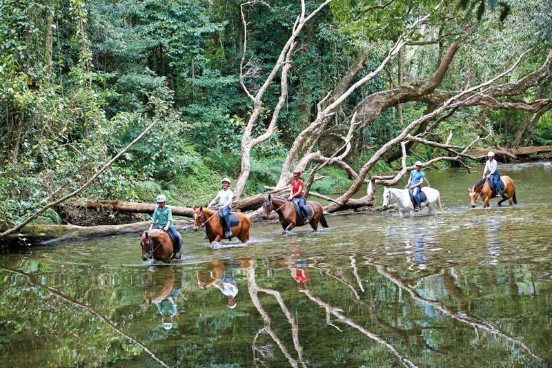 マウントンライド レインフォレスト半日乗馬ツアー(4歳から参加可能)