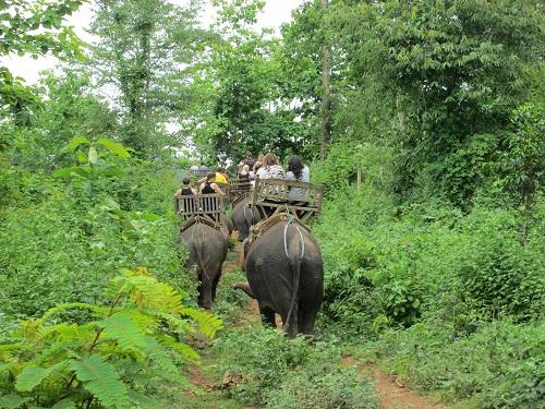 1日:象乗り体験+クアンシー滝+モン族の村(昼食付・日本語ガイド付)