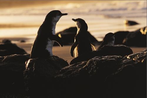 時間がなくても会える!ペンギン・ダイレクト(夏季限定)