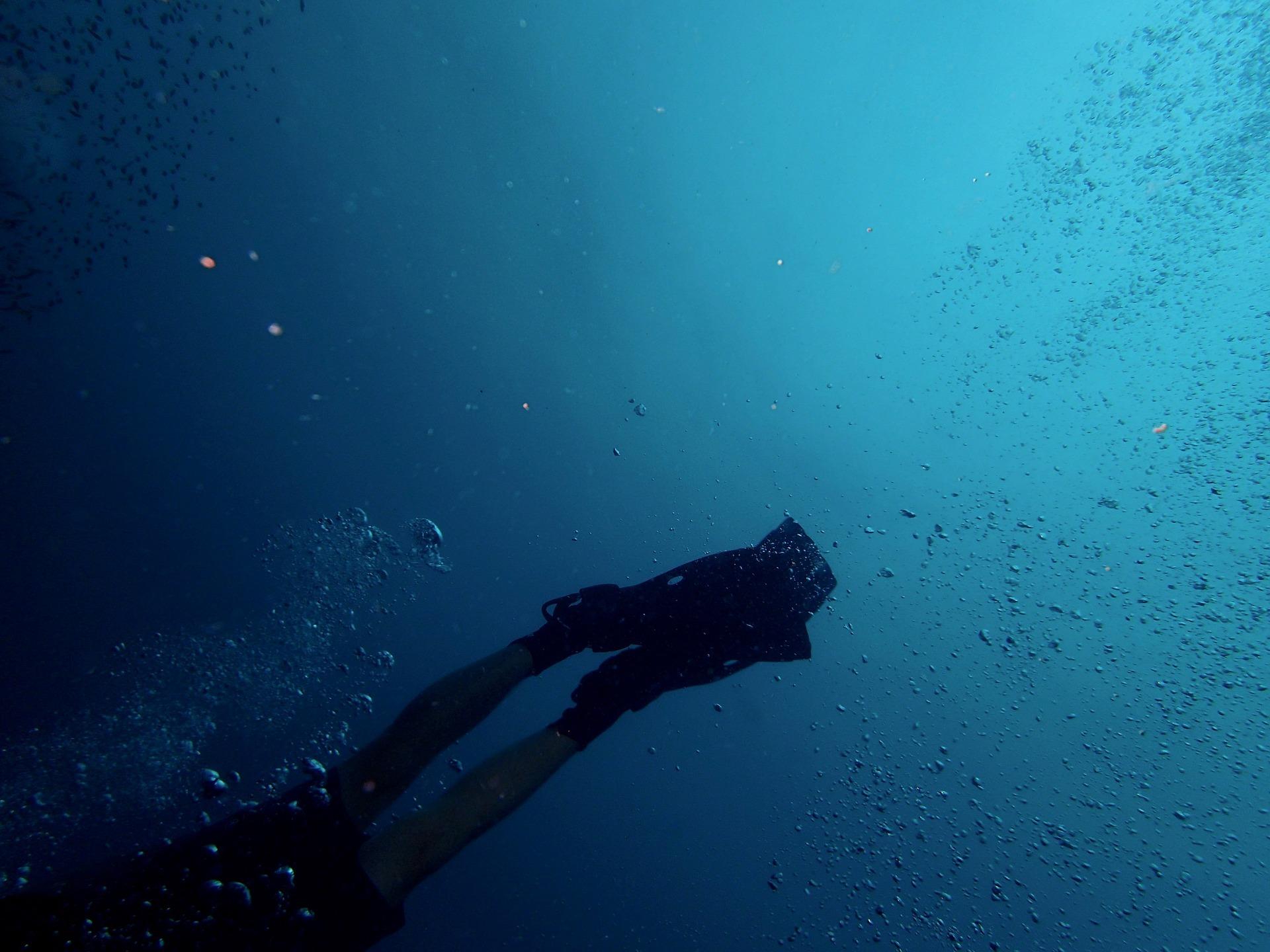 一押しダイブスポット、キーラーゴ島沖珊瑚礁でファンダイビング (ライセンス保持者限定・日本人インストラクター付)