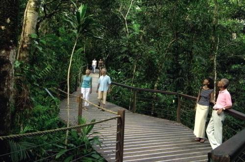 スカイレールの途中にある熱帯雨林ボードウォーク
