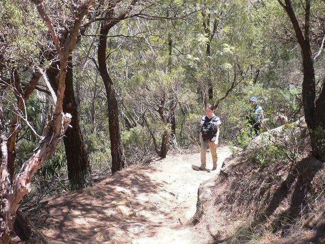 ユーカリの森をハイキング